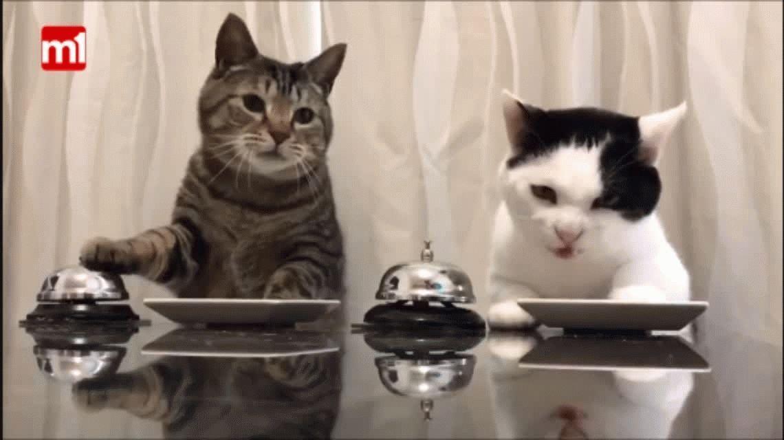 VIDEO: Mirá el viral de dos gatos que tocan una campana para pedir que les den comida