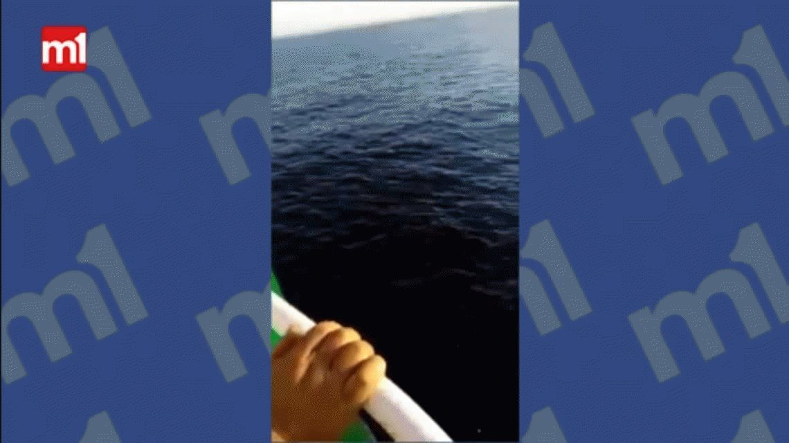 VIDEO: un marinero saltó 12 metros de altura para salvar a una ballena