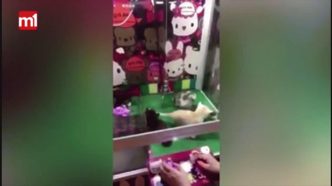Polémica por una máquina en la que el premio es un gatito de verdad