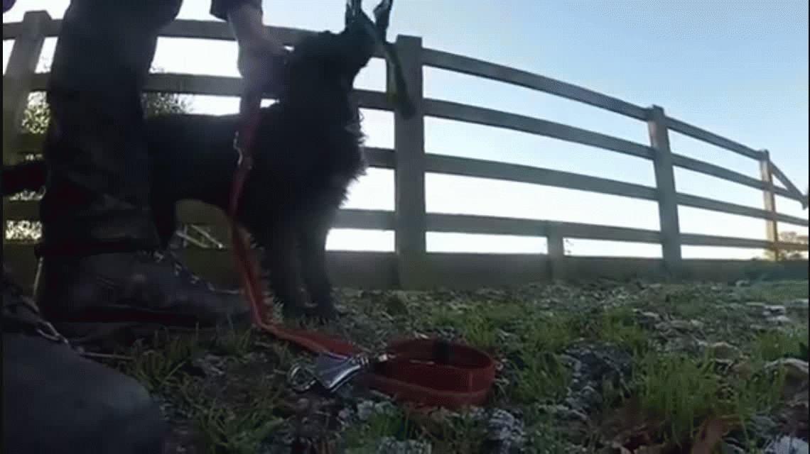Conocé a Molly, la única perra en el mundo entrenada para rescatar gatos