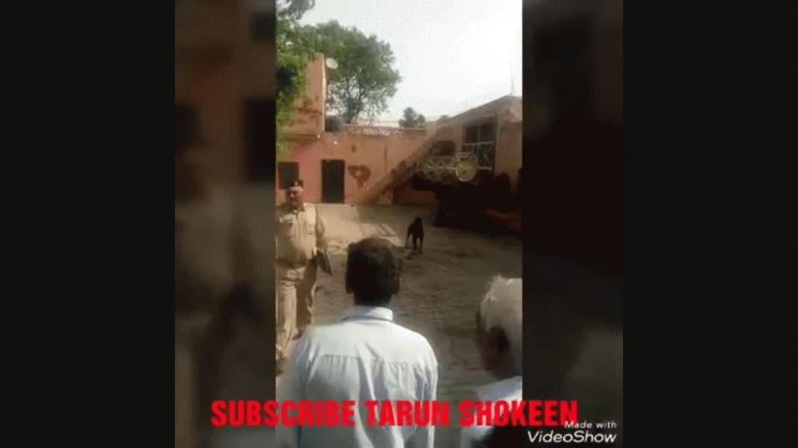India: un perro mató a su dueño y masticó su cuerpo durante más de una hora