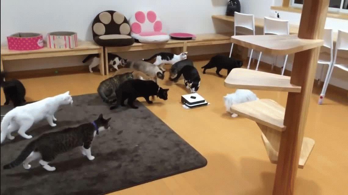 Gatos versus robot aspiradora: ¿quién ganará la pelea?