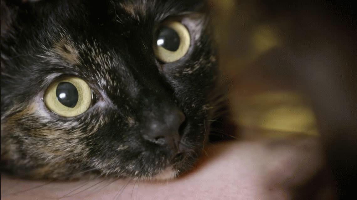 La historia de la gatita que rescató a la madre de su dueña y se volvió viral