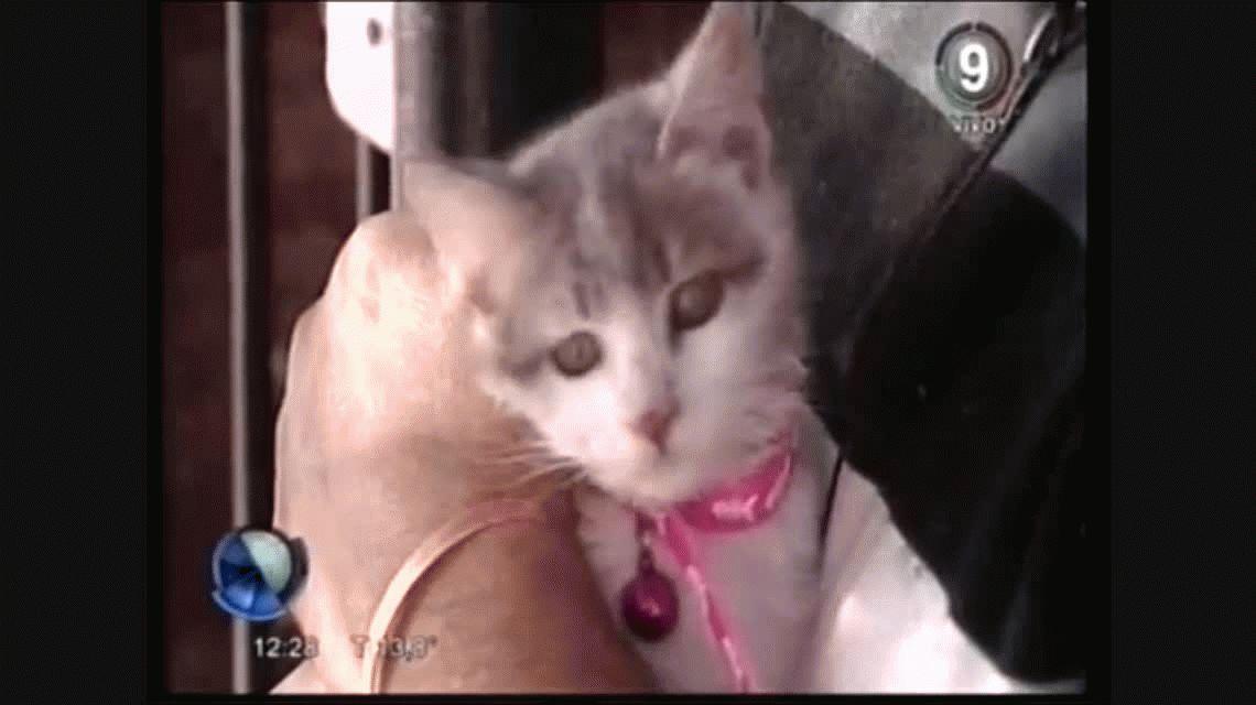 Catalina, la gatita que sobrevivió a un incendio en Bahía Blanca