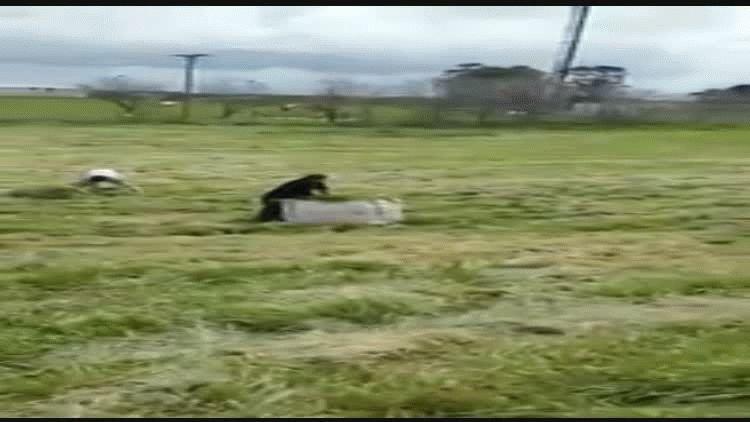 Así junta la policía pasto de la ruta para alimentar a los caballos. Video de 0223