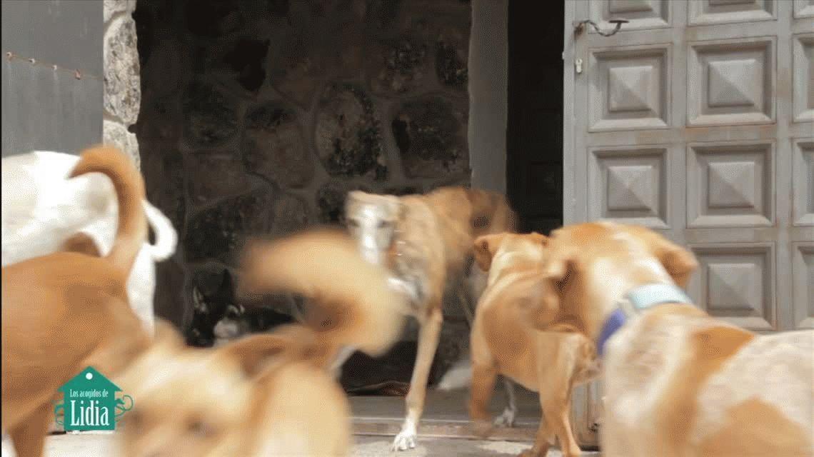 Mirá la versión más tierna de Despacito: perritos sin casa te piden que los adoptes