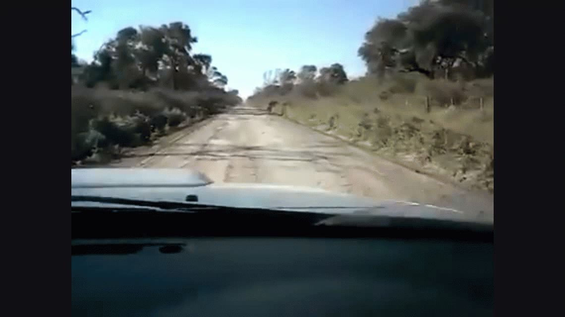 VIDEO: Las langostas avanzan sobre los campos en el Chaco