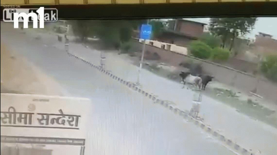 VIDEO: Andaba en moto en India y un toro lo embistió