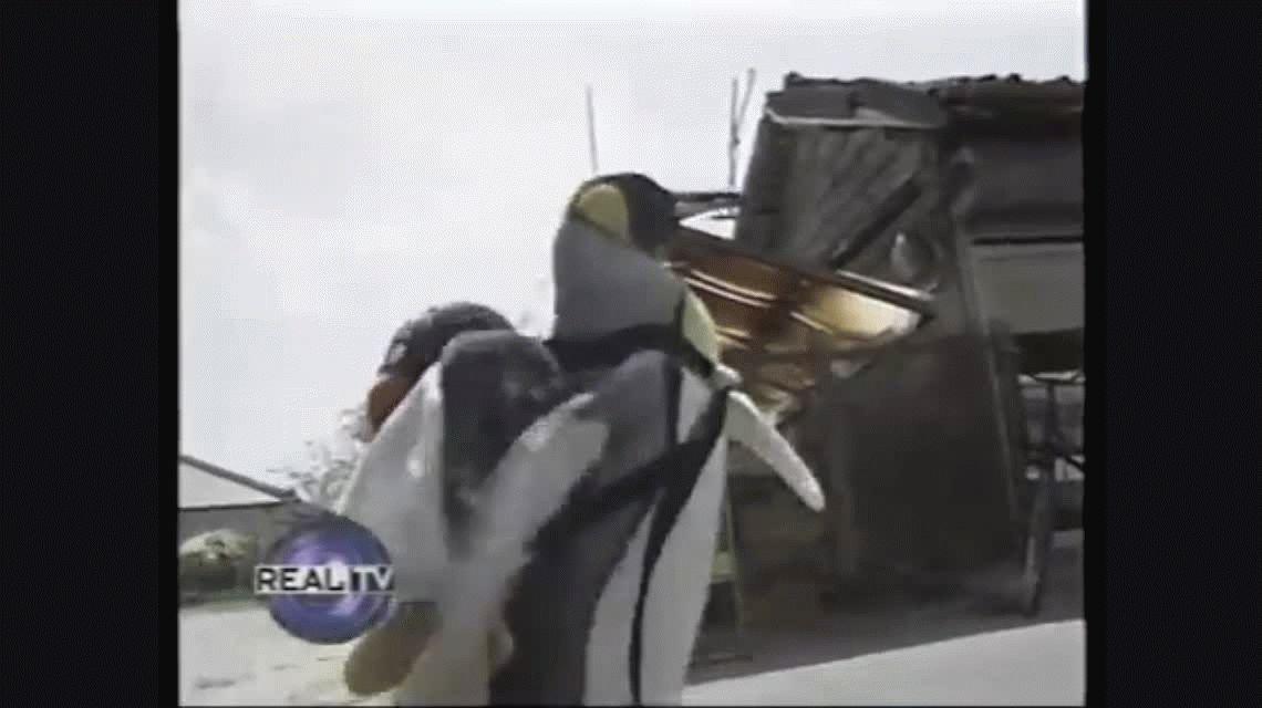 Viral del día: ¿Por qué la pingüina Lala es furor en Japón?