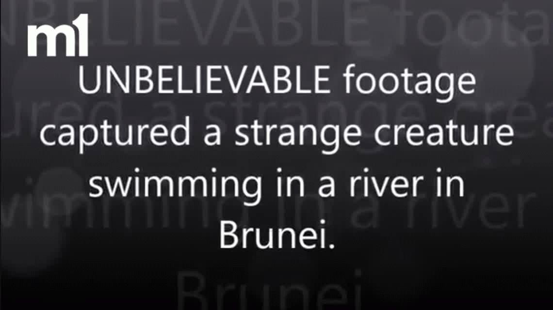 VIDEO: Extraña criatura es filmada en un río de Brunéi