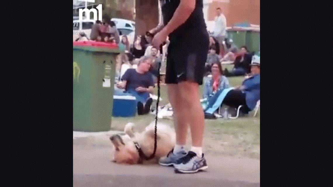 VIDEO: Un perro simula estar muerto para no irse de la plaza