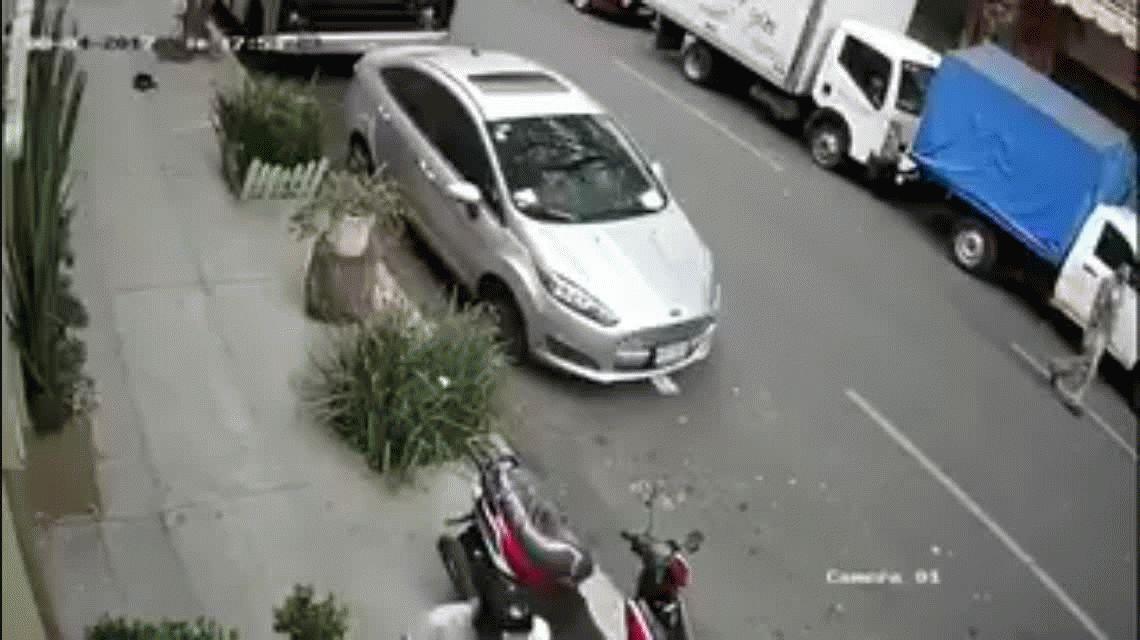 VIDEO: Un pitbull ataca a una mascota y a su dueño