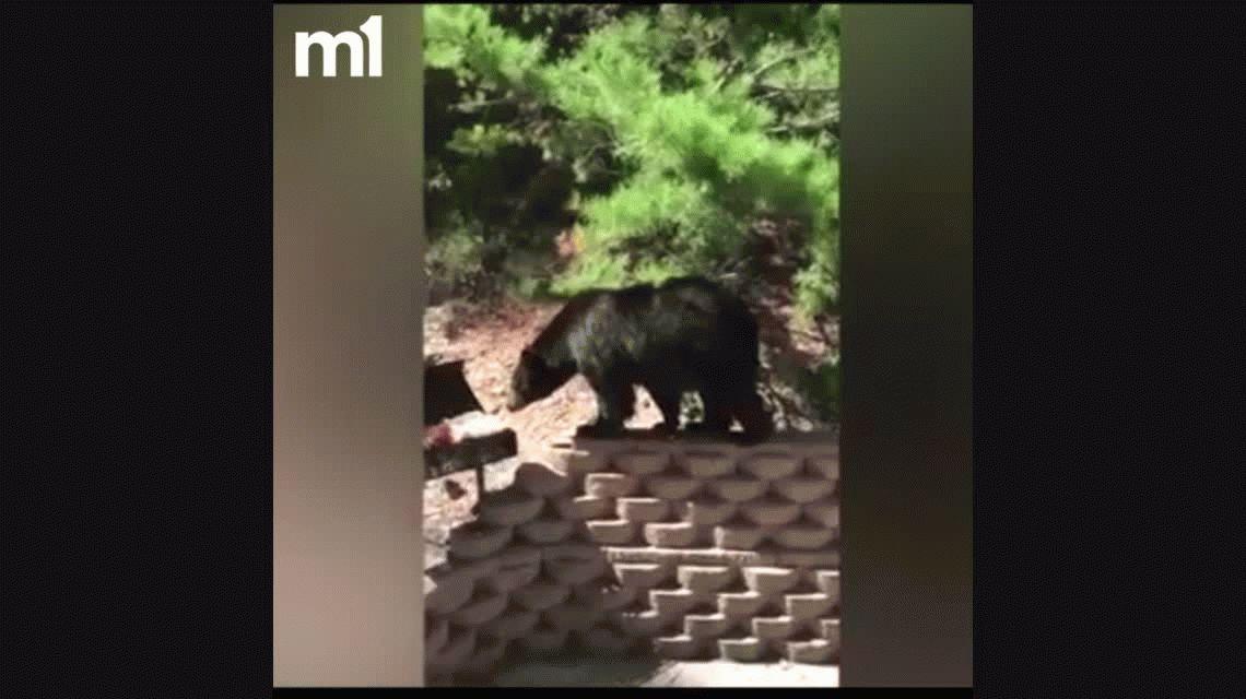 VIDEO: Dos hombres se le plantan a un oso que trataba de robarles el asado