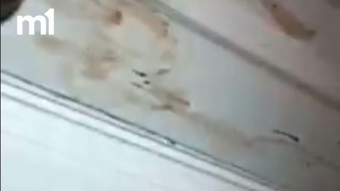 Encontraron su casa bañada en sangre: su perro atacó a un ladrón