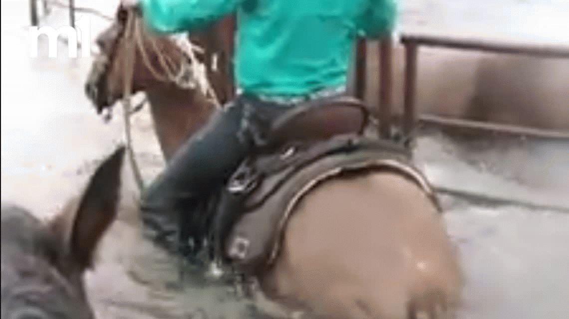 VIDEO: Mirá a un cowboy rescatar a un caballo afectado por el huracán Harvey
