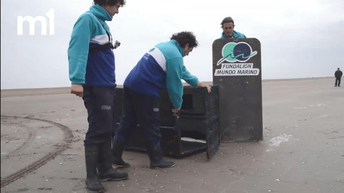 VIDEO: La emotiva reacción de dos lobos marinos al ser devueltos al mar