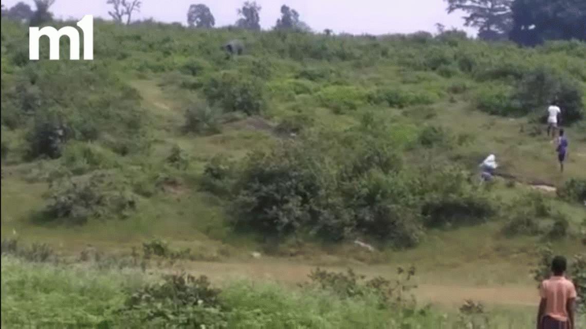 VIDEO: Buscó una selfie con un elefante, pero fue aplastado y murió
