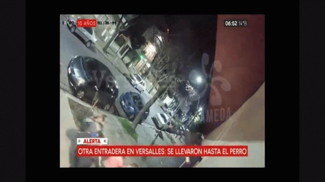 Delincuentes se llevaron un perro de raza durante una entradera en Versalles