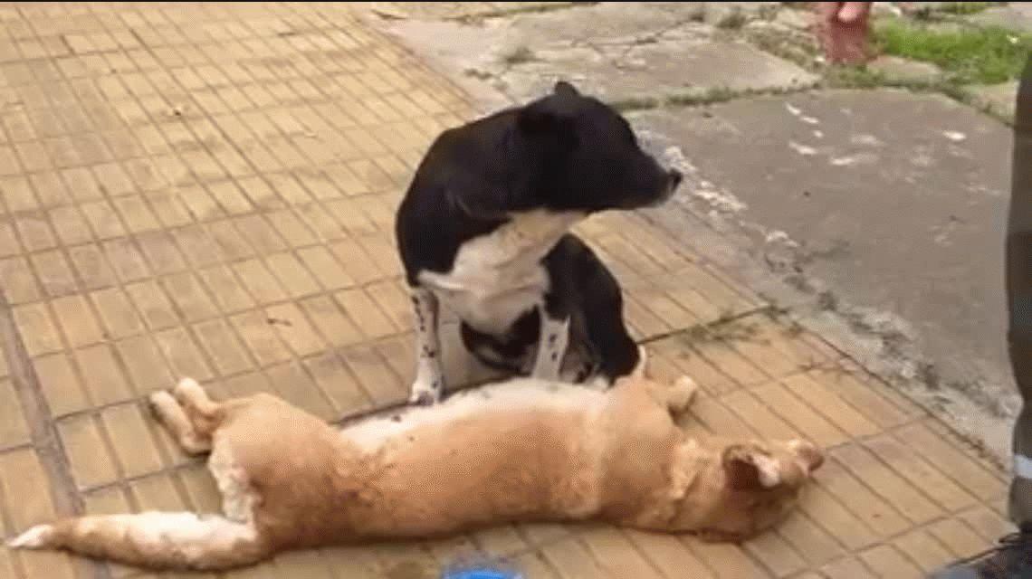 VIDEO: La conmovedora reacción de un perro por una perra atropellada