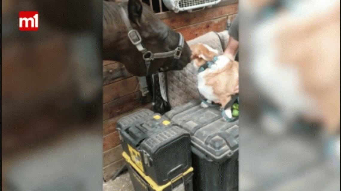 Derroche de amor: la amistad entre este caballo y un perro es pura ternura