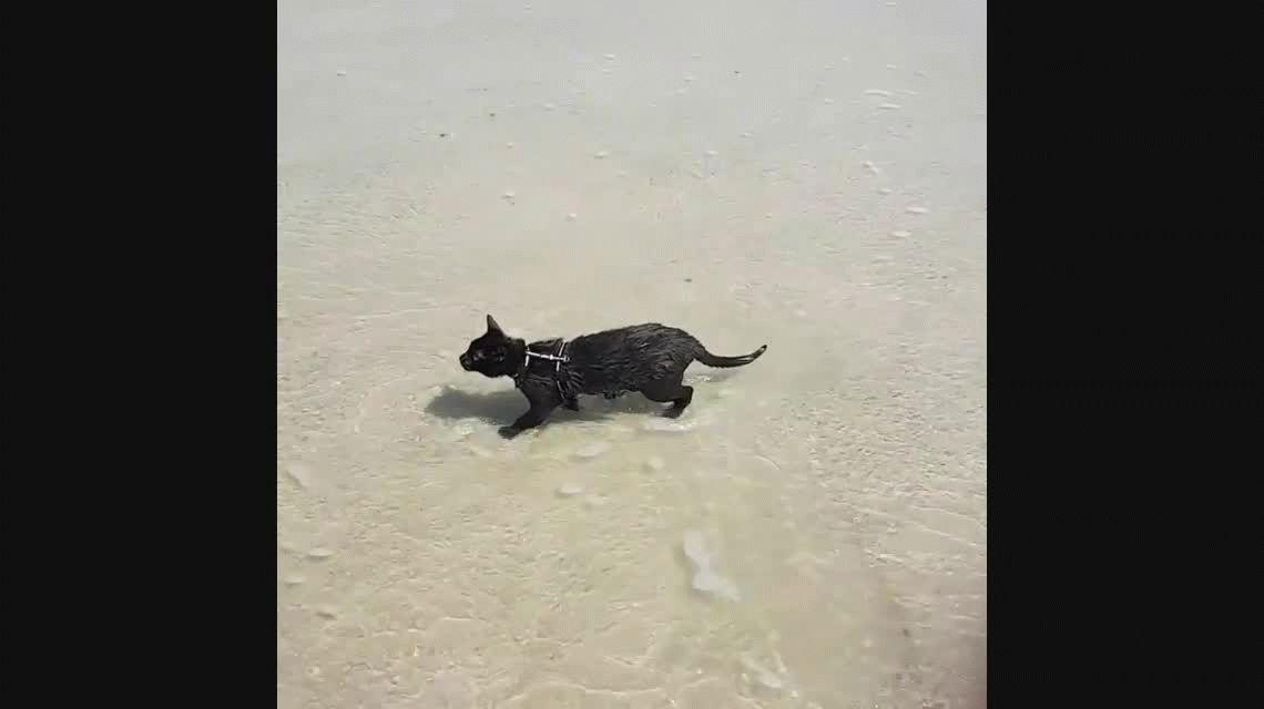 Una gata playera desafía los prejuicios felinos sobre el agua