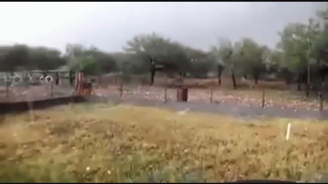 Más de 70 árboles caídos en Capital por la fuerte tormenta eléctrica