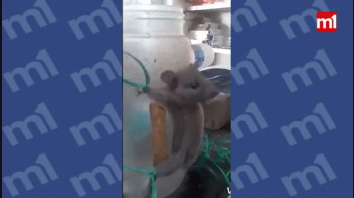 Atrapó a una rata que le robaba comida y la castigó de un modo muy cruel