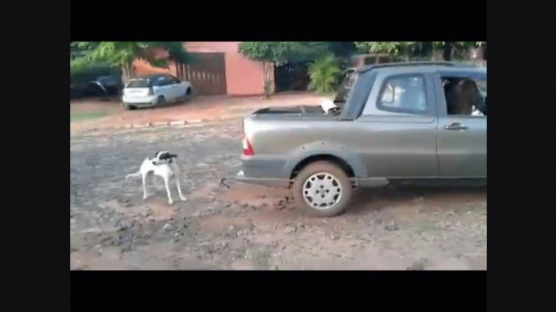 Brutal maltrato animal: arrastraron a un perro hasta matarlo y quedaron detenidas