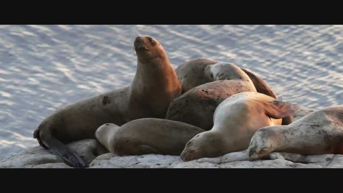 Playa, lobos y aventura: Puerto Madryn tiene de todo para disfrutar el verano