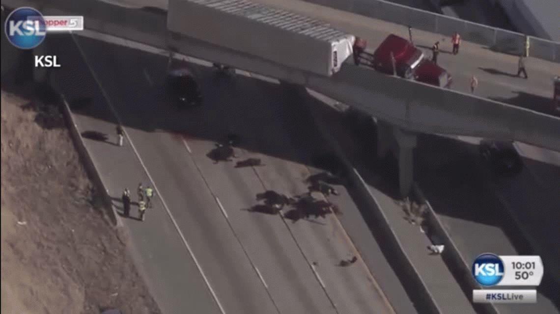 VIDEO: Un camión volcó y 25 vacas murieron tras caer de una autopista