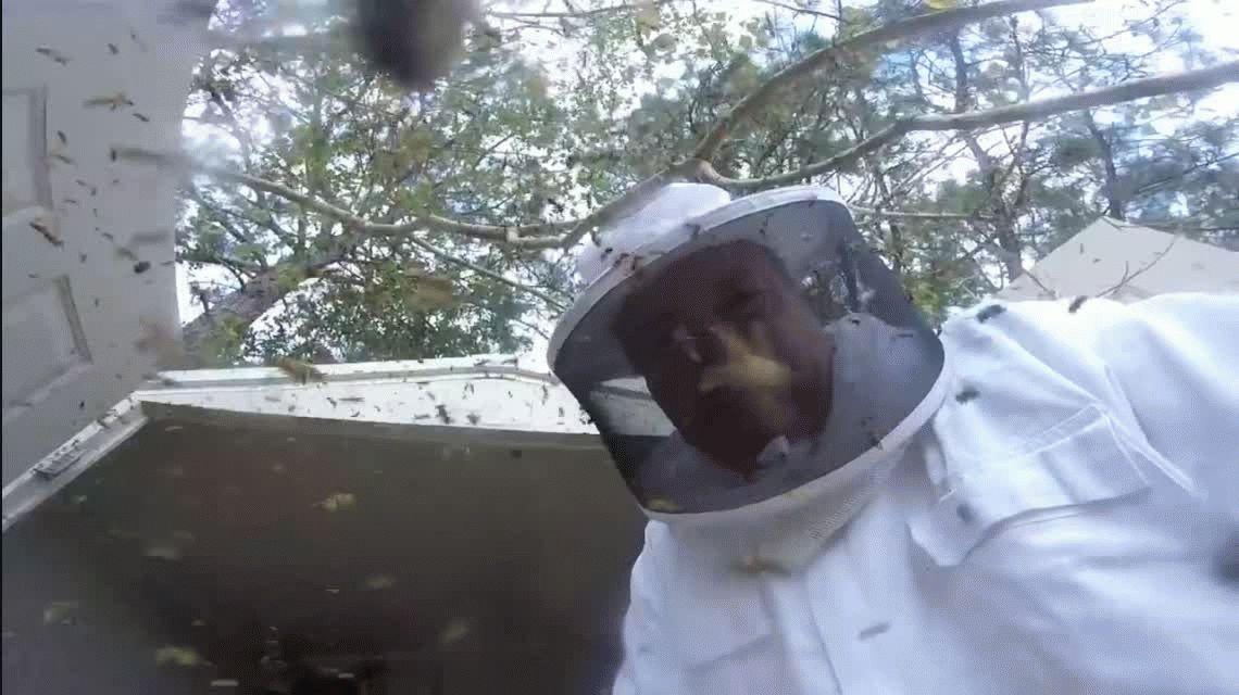VIDEO: Esto pasa si se destruye un nido de avispones de 5 centímetros de largo
