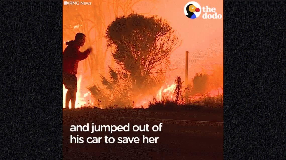 Un hombre arriesgó su vida en el incendio de California para salvar a un conejo