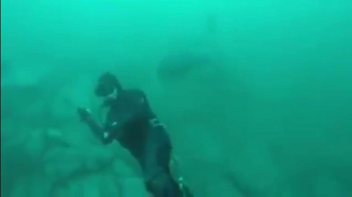 VIDEO: Un buceador estuvo muy cerca de ser decapitado por un tiburón blanco