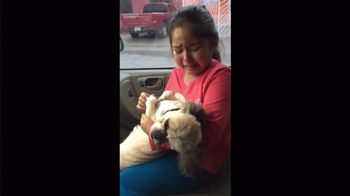 Una nena llora desconsolada por el corte de pelo de su perro: ¡Parece un puerco!