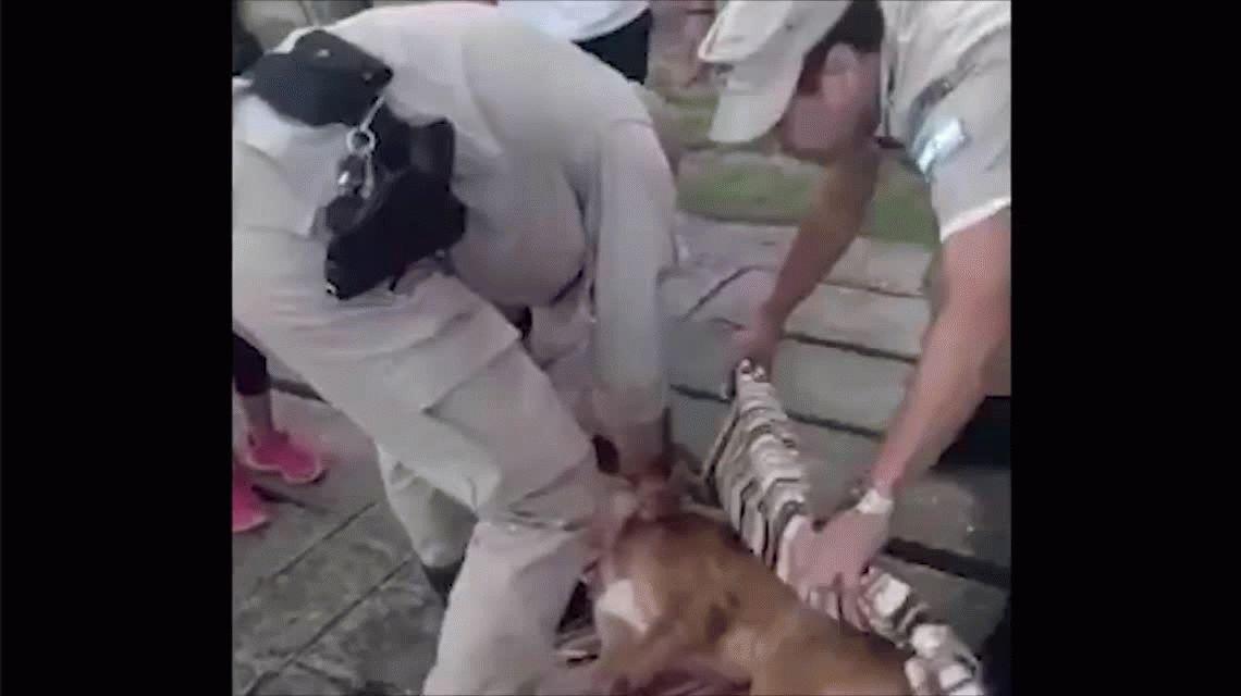 La Plata:  prefectura rescató a un perro que cayó al agua  y busca a su familia