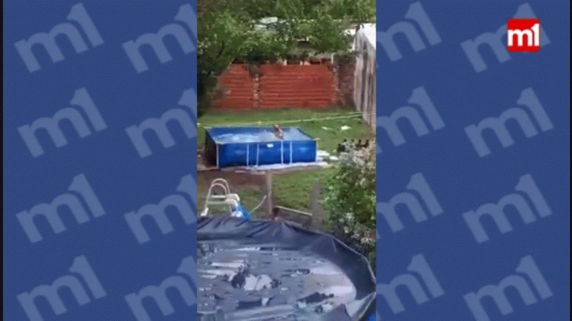 Viral: una perra se entregó con locura a la pileta y su dulzura derrite a las redes