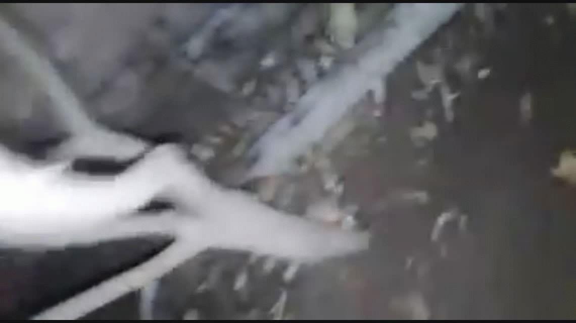 VIDEO: Escuchó ruido en el patio, salió a ver qué era y encontró un yacaré bebé