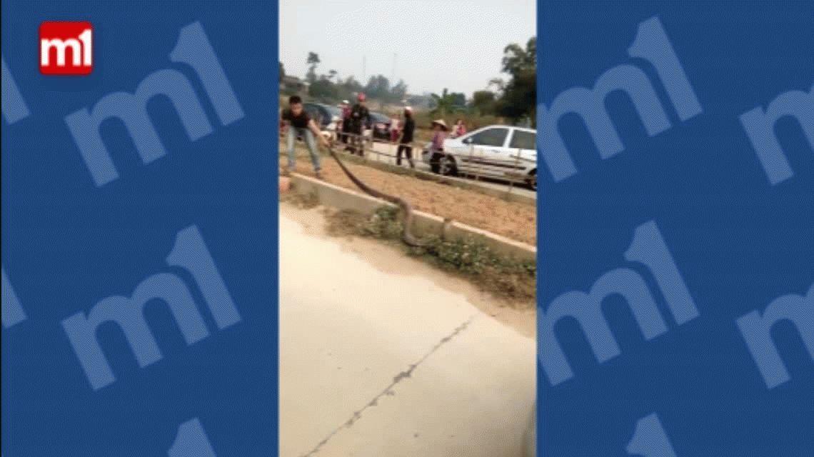 VIDEO: Pánico por la aparición de una serpiente gigante en una autopista