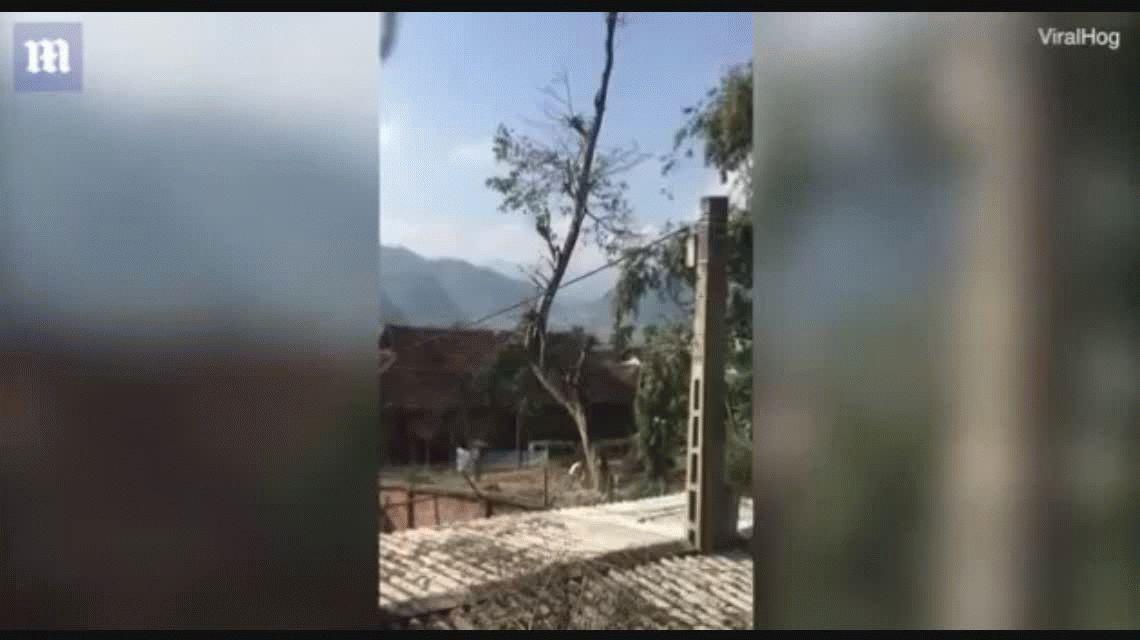 VIDEO: Cortó un árbol, calculó mal dónde iba a caer y destruyó su casa