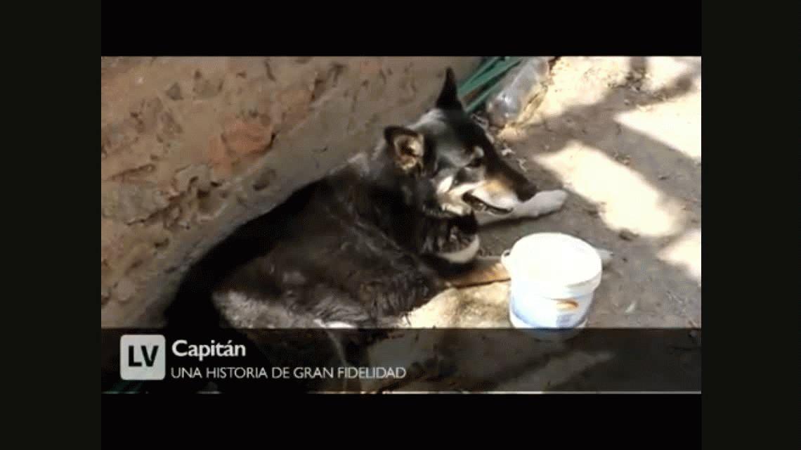 Polémica por el entierro de Capitán, el perro que vivió junto a la tumba de su amo