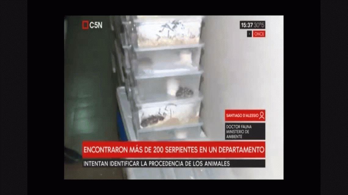 Encuentran 200 serpientes en un departamento de Balvanera