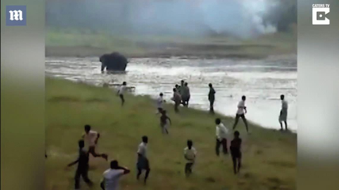 Un elefante enojado embiste contra una multitud en la India y deja un muerto