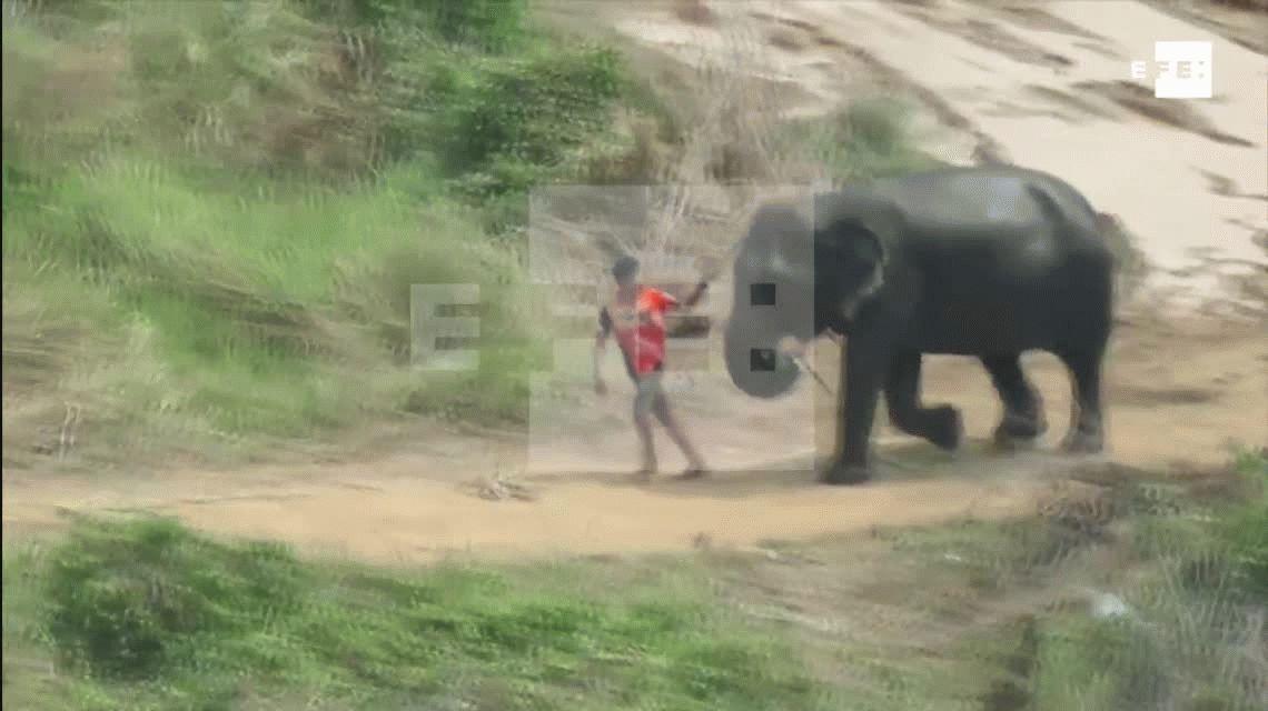 VIDEO: Brutal maltrato a elefantes en un campeonato de polo