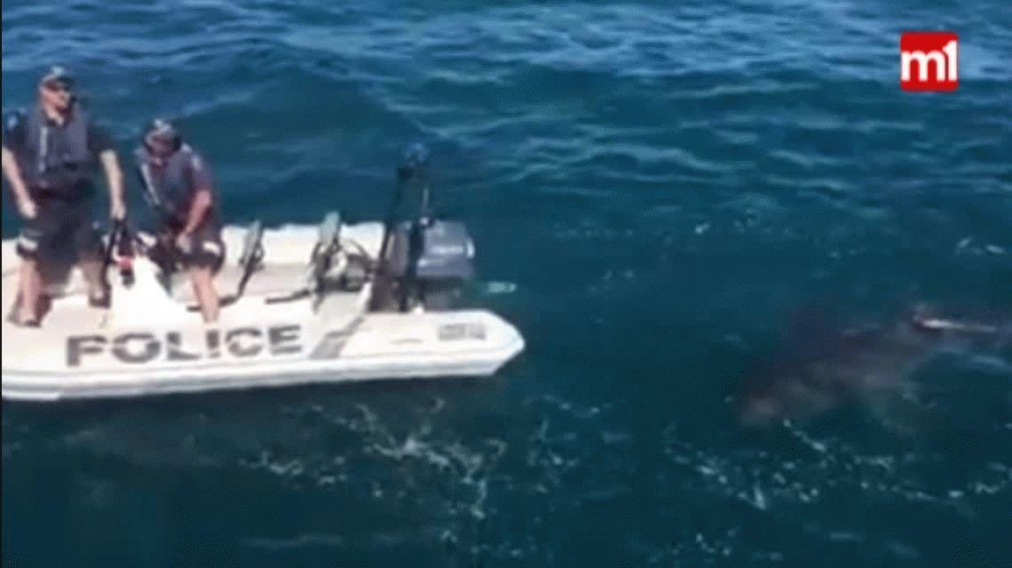 VIDEO: Policías salieron a patrullar el mar y se encontraron con un tiburón blanco