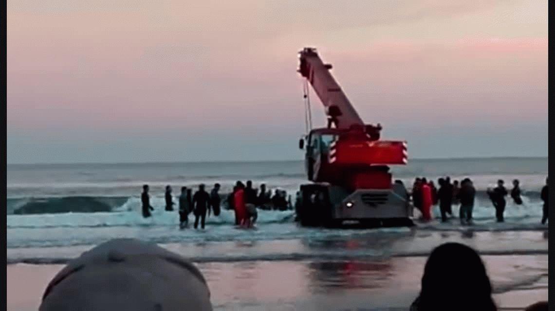 Todo Mar del Plata se moviliza para devolver al mar a una ballena encallada en Punta Mogotes