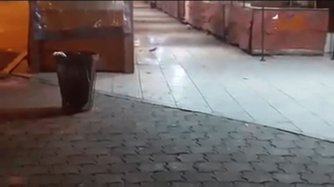 Ratas en el Paseo de Artesanos