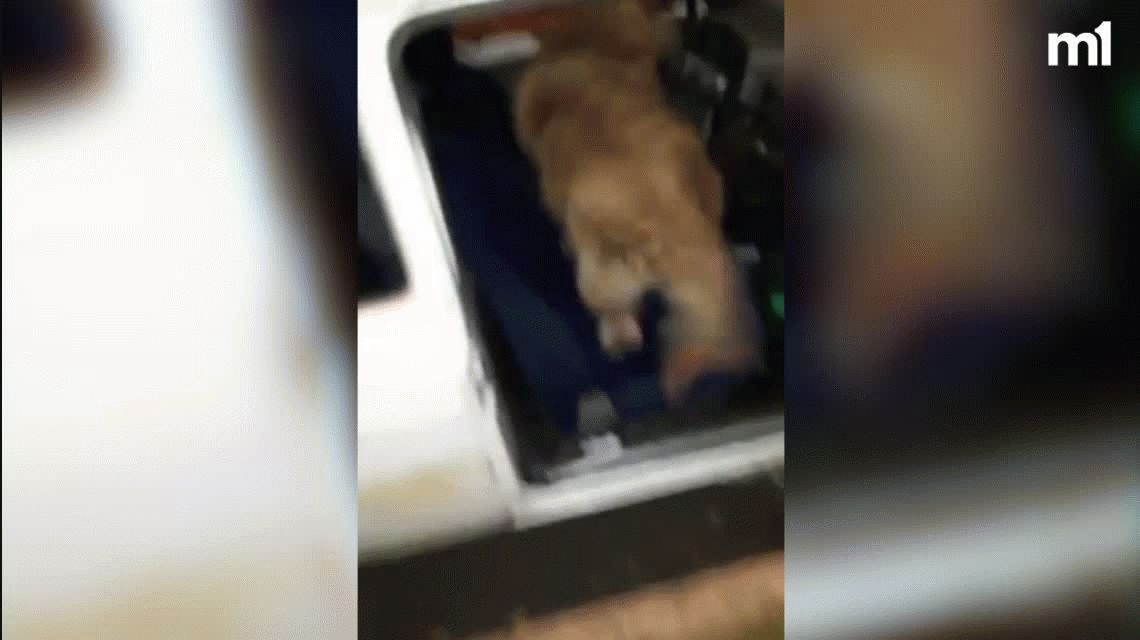 La mejor foto: recuperó a su perro la mujer que había ofrecido su auto a cambio