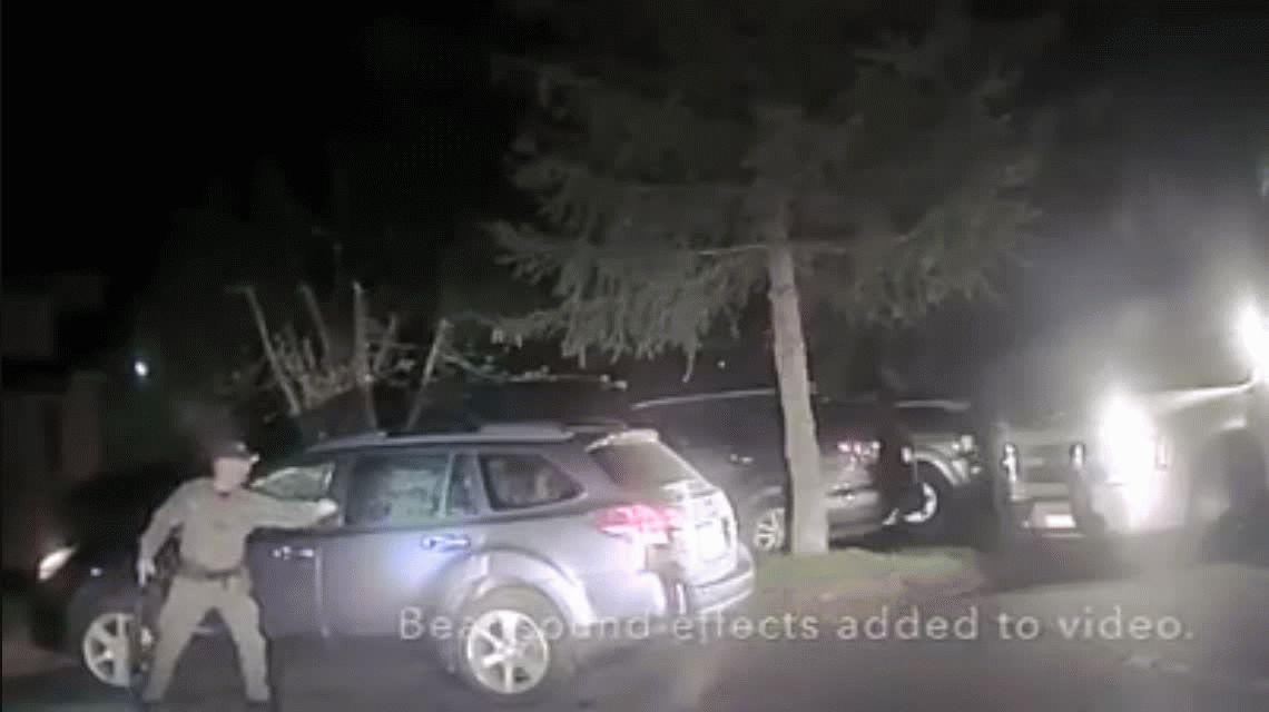 El peligro de ser un oso: tuvieron que romper el vidrio de un auto para liberarlo