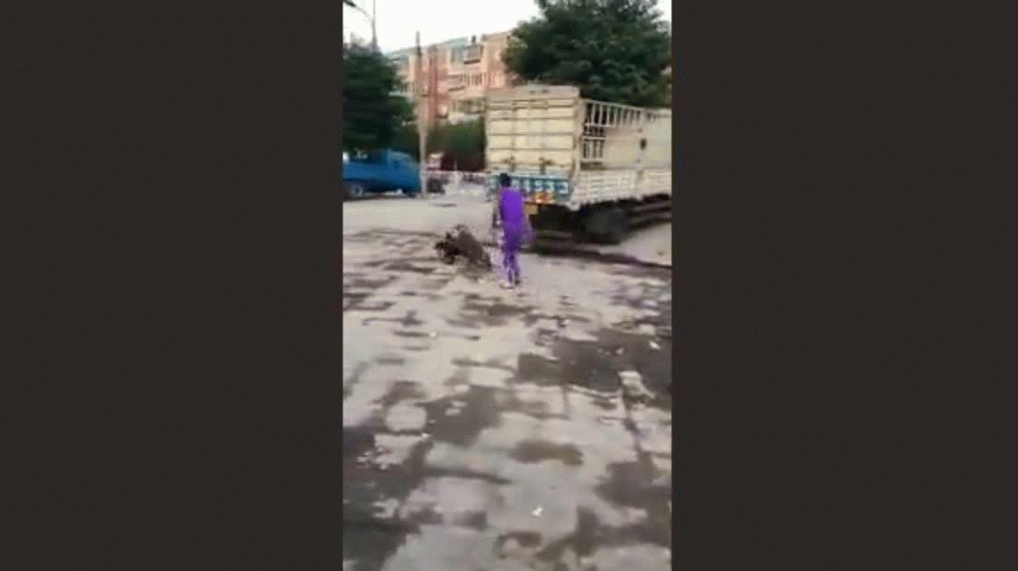 VIDEO: Un mono en bicicleta juega carreras con un perro y divierte a todos