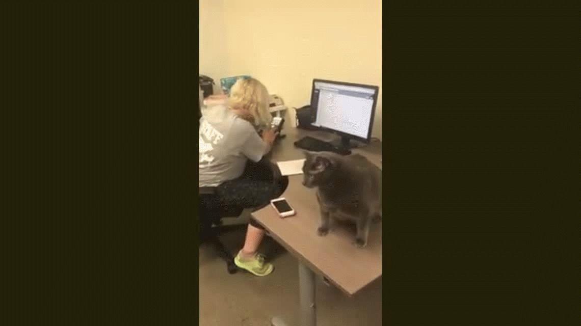 Bruno, el gato extra que se ganó a la web y encontró un nuevo hogar